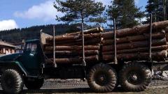 Проверяват колите, които превозват дървесина за Румъния