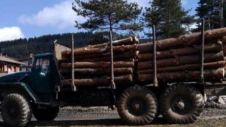 По дирите на липсваща контролна марка за дървесина тръгнаха в Петрич