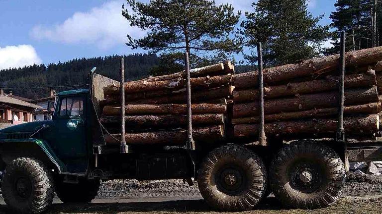 Горски хванаха камион с незаконна дървесина в Пазарджик