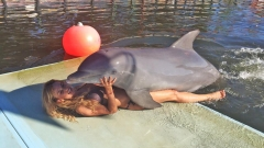 Делфин целуна Малина (СНИМКИ)