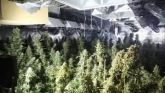 Разбиха модерна нарколаборатория за марихуана в Шипка