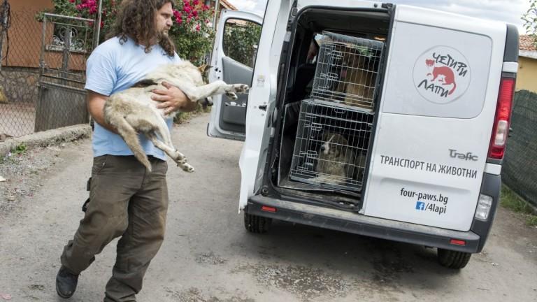 Двуседмична кампания за кастрация, ваксинация и обезпаразитяване на бездомни кучета