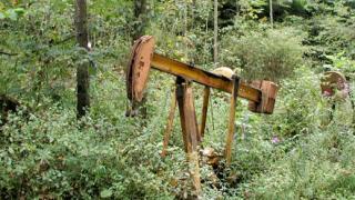 Еколози осъдиха България в Старбург