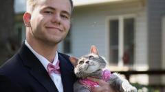Абитуриент избра котка да му бъде дама на бала