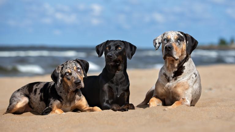 В света има хиляди различни породи кучета и със сигурност