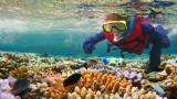Избелването на коралите в Големия бариерен риф по-зле от очакваното
