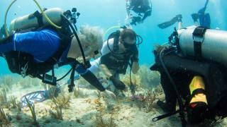 Как ще възстановим коралите