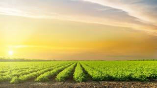Как в Китай успяха да се справят със земеделски вредители с 98% успеваемост?