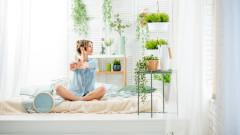 Наистина ли цветята пречистват въздуха вкъщи