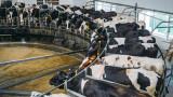 До 2030-а трябва да започне спад на консумацията на месо заради климатичната криза