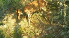 Откриха два мъртви елена край река Ропотамо