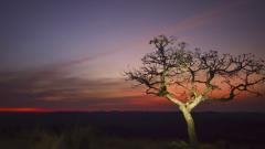 16 млн. души са застрашени от глад в Южна Африка заради сушата