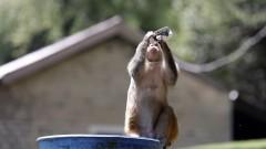В Индия маймуна отвлече бебе от майка му и го уби