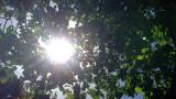 Слънце в неделя