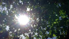Слънце в четвъртък