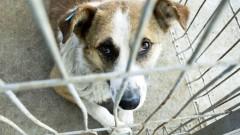 Спасиха куче, след като бе посочено с брадва