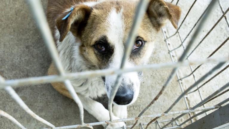 Спасиха куче, след като бе посечено с брадва