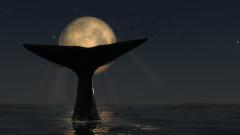 Ще изчезнат ли южните китове