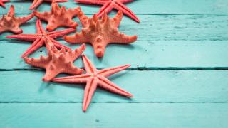 И морските звезди едва дишат