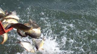 Езерото в Дружба – готово за рибари