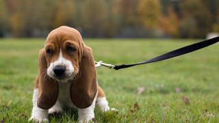 Разхождане на кучета до 200 м от вкъщи предлагат в Кюстендил