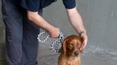 """Полицейско куче откри близо 200 кг хероин на """"Капитан Андреево"""""""