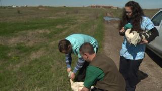 Еколози пуснаха бедстващи щъркели край село Опан