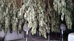 Спипаха баща и син от Варна, отглеждали марихуана в домашна оражнерия