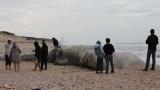 Израел затвори крайбрежието заради разлив на петрол