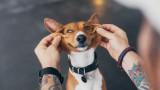 Кучетата и девет породи, които не миришат