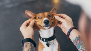 9 породи кучета, които не миришат