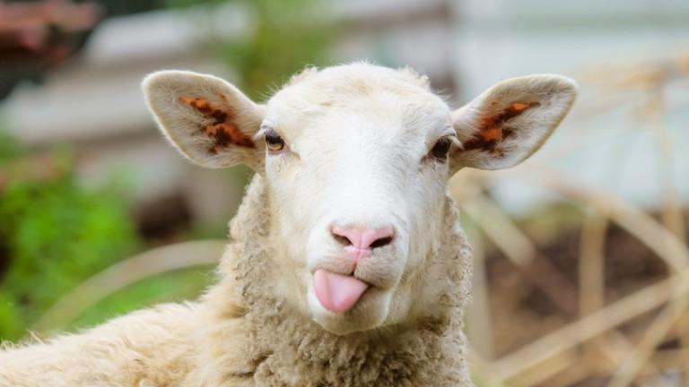 Борисов: 3 бугатита като на Роналдо има в България, 170 лв. излиза цяло агне от фермата