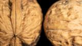 Мъжете, ядките, плодовитостта и кои имат най-голям ефект