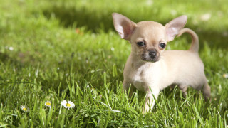 БАБХ връща у нас кучето Рая, пратено в Норвегия с фалшиви документи