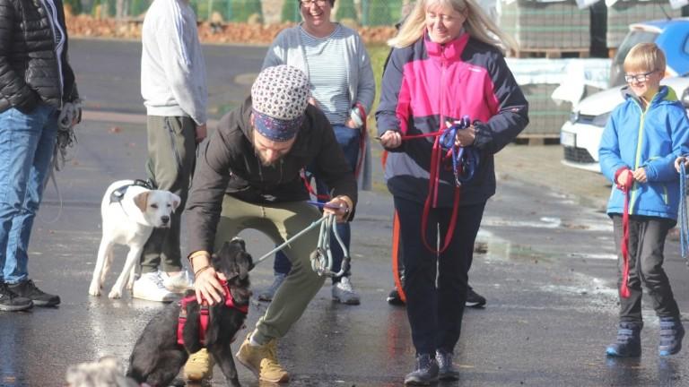 Има ръст на осиновяванията на кучета от общинските приюти, отчитат