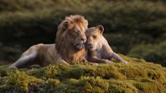 """""""Цар лъв"""" ще се сдобие и с предистория"""