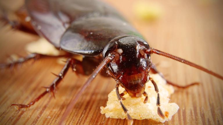Интересни факти за хлебарките