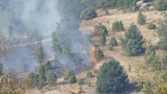 Пожар избухна в борова гора край мъглижко село