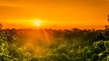 Амазонската джунгла, най-голямата тропическа гора в света и мистериите на Амазония