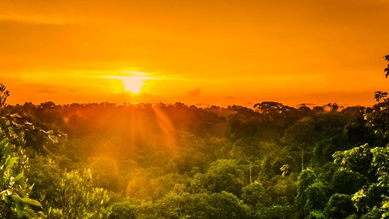 Мистериите на амазонската джунгла