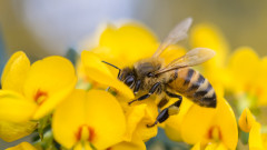 Групата за промяна на наредбата за пчелите вече работи