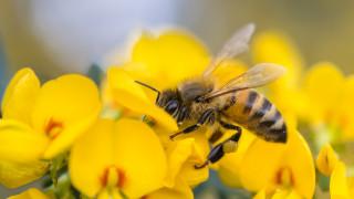 Учени с план за спасяване на пчелите и обогатяване на земеделците