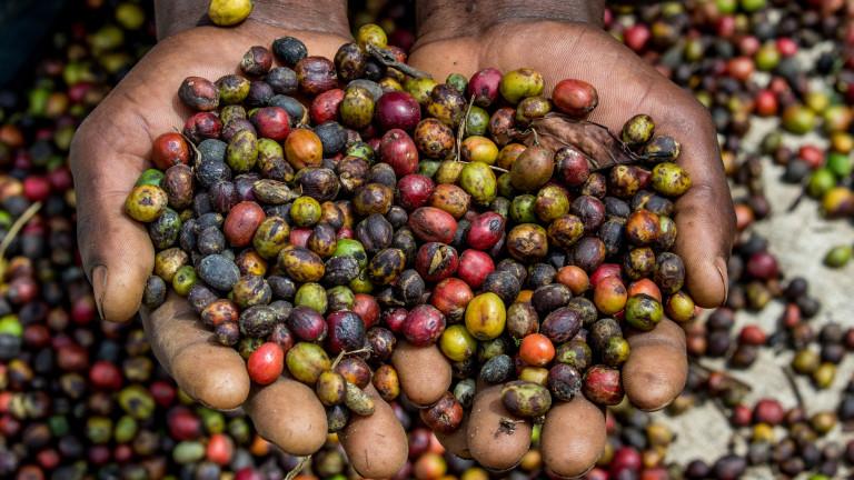 Кафето е третата най-разпространена напитка на планетата след водата и