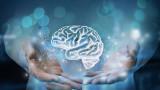 Защo човешкият мозък се смалява
