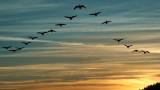 Ще спрат ли птиците да отлитат на юг