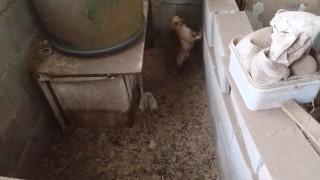 БАБХ затвори незаконен развъдник на кучета в Белослав
