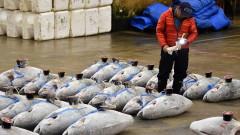 В Япония затвориха най-големия рибен пазар в света