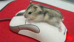 Мишките не са виновни за хроничната умора