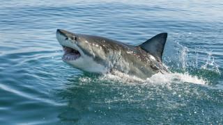 Австралийски сърфист преби акула, за да спаси жена си