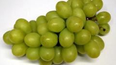 По тон грозде на декар събират в Силистра